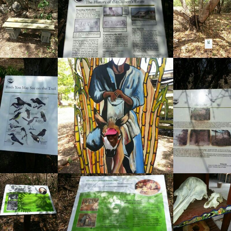 Nature Trail Collage