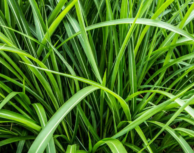 GARD Center - IICA Press Release: Vetiver Planting Training Session